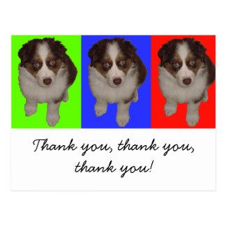 Cartão Postal Três tri filhotes de cachorro australianos