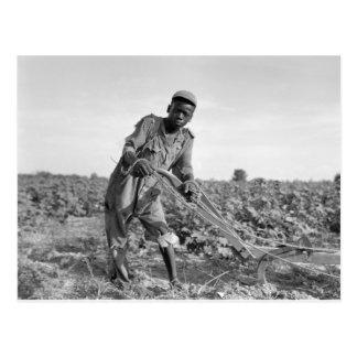 Cartão Postal Treze-ano velho arando um campo em Geórgia