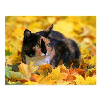 Cartão Postal Tricolor gato gato de sorte schildpatt no outono