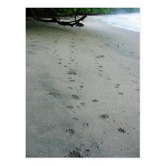 Cartão Postal Trilhas animais - parque de Manuel Antonio, Costa