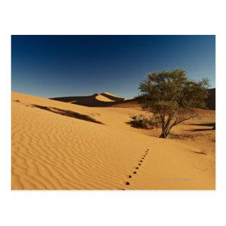 Cartão Postal trilhas na paisagem do deserto de Namib em