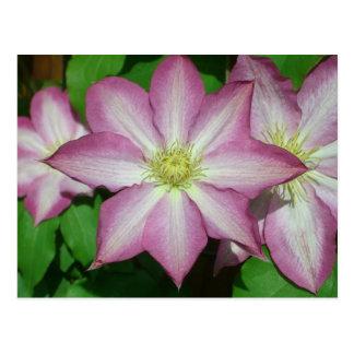 Cartão Postal Trio de flores do primavera do rosa e do branco do