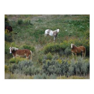 Cartão Postal Trio do cavalo
