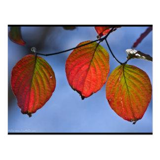 Cartão Postal Trio iluminado colorido das folhas de outono