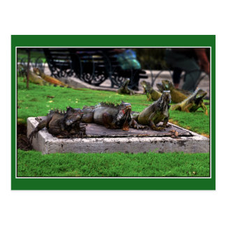 Cartão Postal Trio no parque da iguana, Guayaquil, Equador