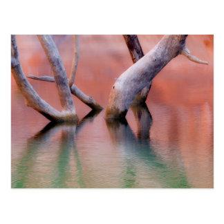 Cartão Postal Troncos inoperantes do Cottonwood no lago | Utá