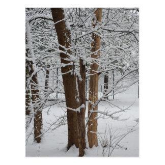 Cartão Postal troncos nevado