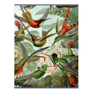 Cartão Postal Tropical exótico da arte vibrante dos colibris do