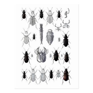 Cartão Postal Truppe von alienígena