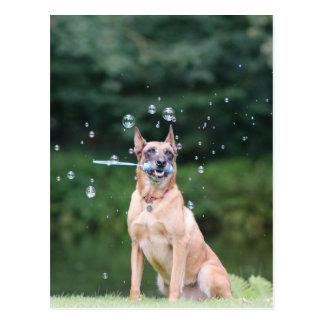 Cartão Postal Truque de cão: Criam bolhas de sabão