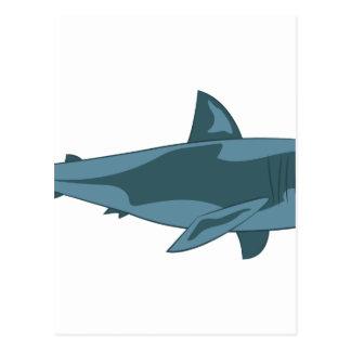 Cartão Postal Tubarão