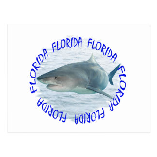 Cartão Postal Tubarão de Florida