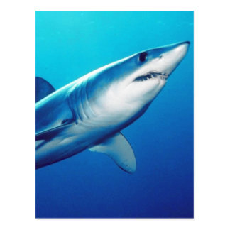 Cartão Postal Tubarão de Mako de Shortfin