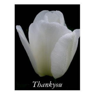 Cartão Postal Tulipa branca