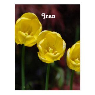 Cartão Postal Tulipa iraniana