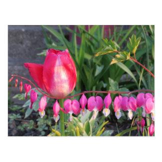 Cartão Postal Tulipa vermelha e flores cor-de-rosa do coração de