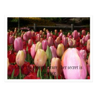 Cartão Postal tulipas cor-de-rosa