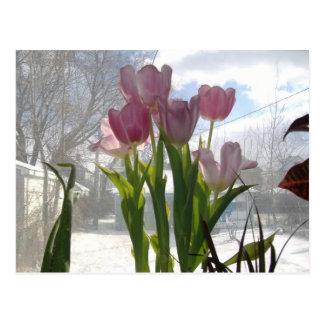 Cartão Postal Tulipas cor-de-rosa no inverno Sun