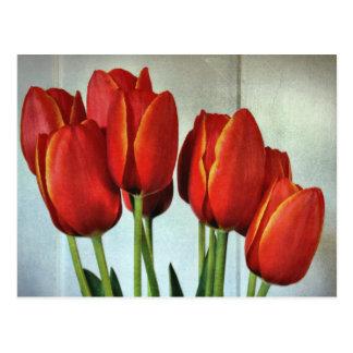 Cartão Postal Tulipas do primavera