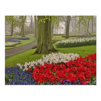 Cartão Postal Tulipas e daffodils, jardins de Keukenhof,