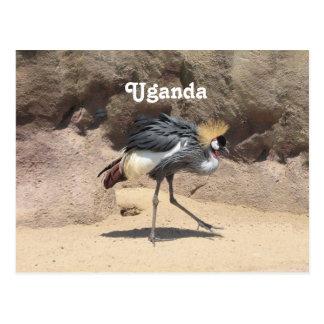 Cartão Postal Uganda Crested o guindaste