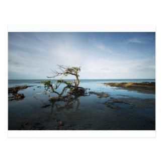 Cartão Postal Última posição dos manguezais