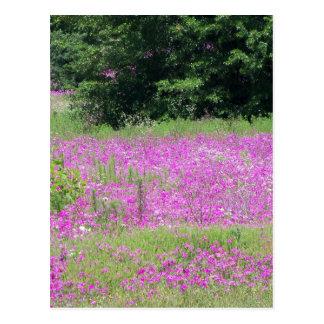 Cartão Postal Um campo de wildflowers cor-de-rosa do primavera