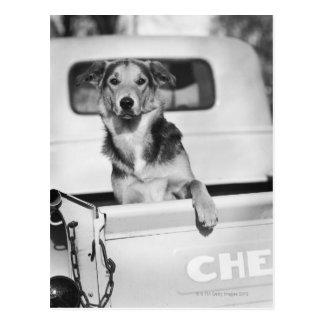 Cartão Postal Um cão em um carro