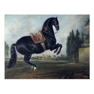 Cartão Postal Um cavalo preto que executa o Courbette