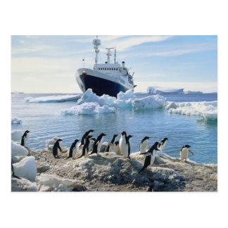 Cartão Postal Um grupo de pinguins que estão em uma praia gelada