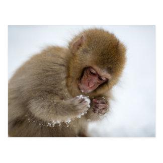 Cartão Postal Um Macaque japonês do bebê (ou macaco da neve)