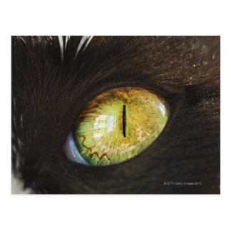 Cartão Postal Um olho de gato