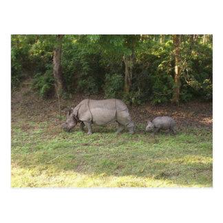 Cartão Postal Um parque nacional Nepal de Chitwan do rinoceronte