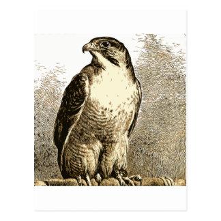 Cartão Postal Um pássaro 59
