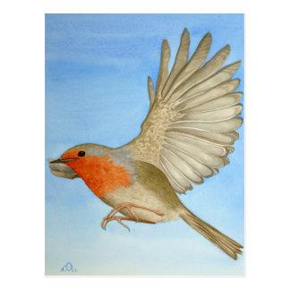Cartão Postal Um pisco de peito vermelho em vôo