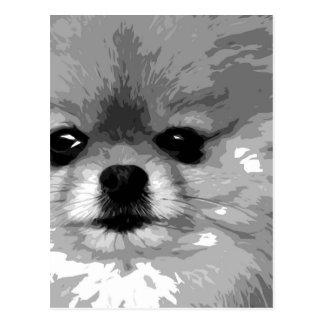 Cartão Postal Um Pomeranian preto e branco