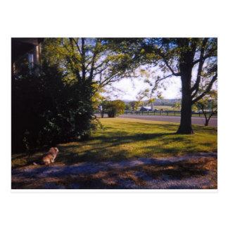 Cartão Postal Um ponto da beleza pastoral em Brentwood,