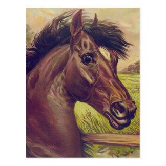 Cartão Postal Um príncipe do sangue pela cabeça de cavalo de