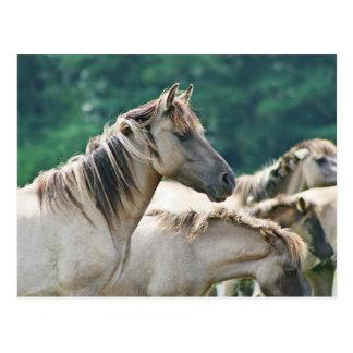 Cartão Postal Um rebanho de cavalos de Brumby de Austrália