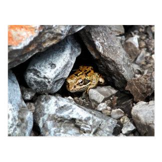 Cartão Postal Um sapo manchado esconde entre as rochas em uma