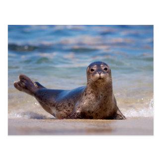 Cartão Postal Um selo em uma praia ao longo da Costa do Pacífico
