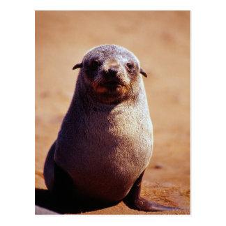 Cartão Postal Um sul novo - lobo-marinho africano