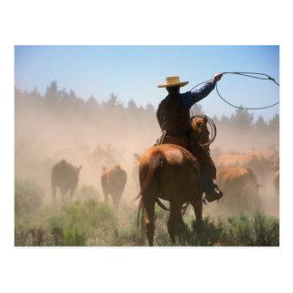 Cartão Postal Um vaqueiro que trabalha para fora o rebanho no