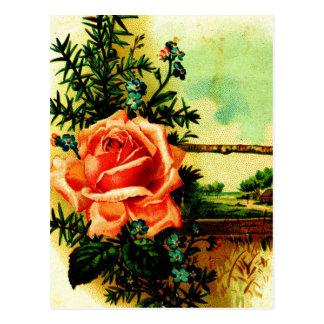Cartão Postal Um verão aumentou