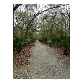 Cartão Postal Uma caminhada na natureza