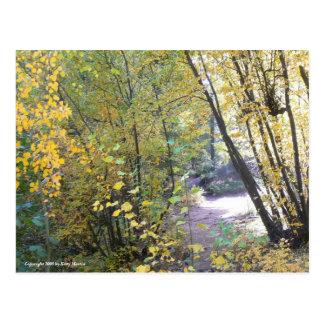Cartão Postal Uma caminhada nas madeiras