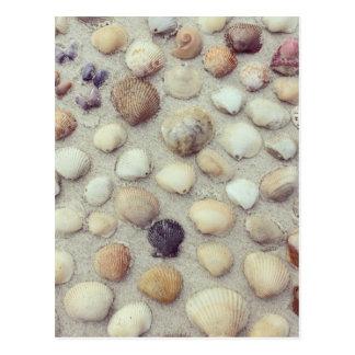 Cartão Postal Uma coleção dos Seashells