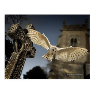Cartão Postal Uma coruja de celeiro (Tyto alba) em um cemitério