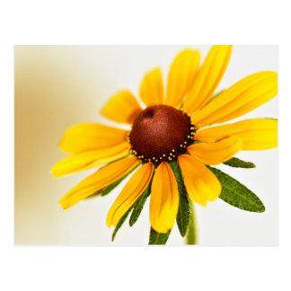 Cartão Postal Uma flor de Susan de olhos pretos