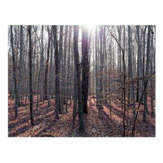 Cartão Postal Uma floresta da faia na queda